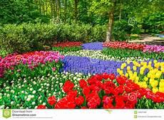 parco fiorito tulip garden in background or pattern stock