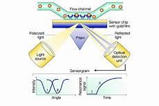 Surface Plasmon Resonance Surface Plasmon Resonance Spr Detects Changes In The