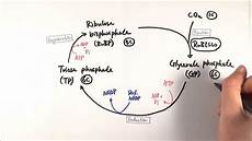 Does The Calvin Cycle Require Light A2 Biology Calvin Cycle The Light Independent Stage