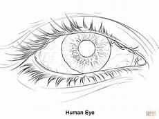 Eye Template Eye Drawing Template At Getdrawings Free Download