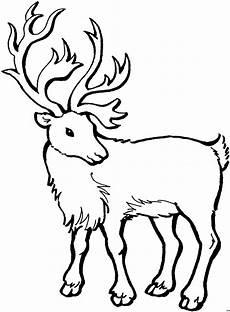 Ausmalbilder Tiere Hirsch Eleganter Hirsch Ausmalbild Malvorlage Tiere