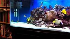 Saltwater Fish Tank Lights 125 Gallon Saltwater Fish Tank Youtube
