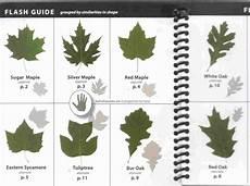 Oak Leaf Id Chart Tree Seed Identification Chart Survival And Self