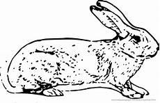 Malvorlage Hase Pdf Ausmalbilder Hasen