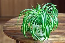zimmerpflanzen luftreiniger 9 low maintenance plants you can t kill get healthy u