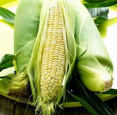 Corn Varieties The Ultimate Corn Guide Grow Harvest Cook Amp Preserve
