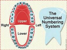 tooth numbering dental charts to understand tooth numbering system youtube