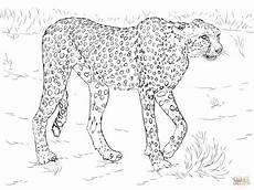 ausmalbilder afrikanische tiere malvorlagen kostenlos