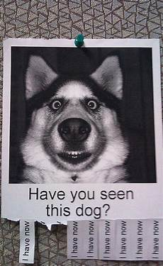Lost Dog Poster Maker 20 Funny Lost And Found Pet Posters