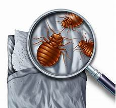 How Do You Get Bed Bugs How Do You Get Bed Bugs Bed Bug Information