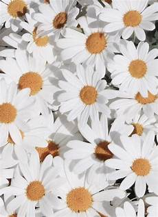 flower wallpaper we it image via we it https weheartit entry