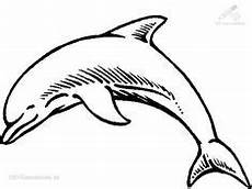 Malvorlagen Delphin Royale How To Draw Dolphins Dolphin Step 10
