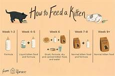 How Much To Feed A Cat Chart Kitten Feeding Schedule How Much To Feed Your Growing