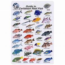 Reef Fish Identification Chart Caribbean Fish I D Card