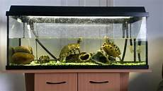 3 Foot Fish Tank Light 3 Foot Fish Tank With Stand And Fluval Filter 106 Bloxwich