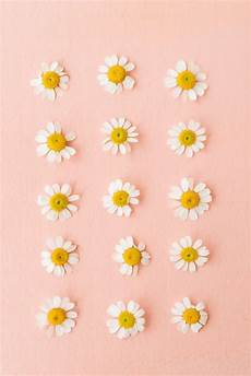 Modern Flower Wallpaper For Iphone by A Collection Of Daisies Wallpaper Backgrounds Flower