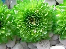 desktop green flower wallpaper 50 green flower wallpaper on wallpapersafari