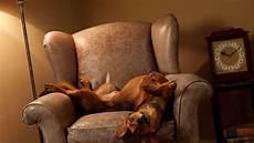 poltrone per cani dove far dormire il in casa le nostre poltrone o la