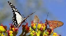Mariposas Y Flores Las Flores Y Las Mariposas Ya No Salen A La Vez Por Culpa