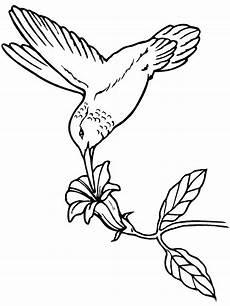 Malvorlagen Vogel Kostenlos Vogel Malvorlagen Malvorlagen1001 De