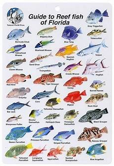 Reef Fish Identification Chart Reef Fish Count Dives Pura Vida Divers Discover South