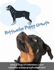 Rottweiler Growth Chart The Rottweilers Blog