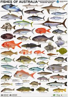 Maine Fish Species Chart Australian Seafood Industry Products To Take Centre Stage