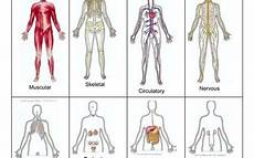 11 Body Systems Body Systems Resources Elink