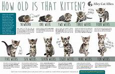 Baby Kitten Age Chart What To Do If You Find A Stray Cat Or Kittens Care Cat