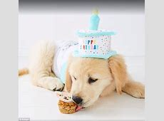 Kmart now sells adorable birthday outfits for dogs   Daily