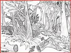 malvorlagen urwald zum ausdrucken ausmalbilder tropischer regenwald rooms project