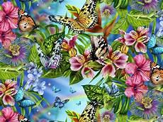 Mariposas Y Flores Mariposas Y Flores