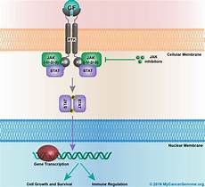 Jak Stat Pathway Jak Stat Signaling My Cancer Genome