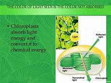 What Does Light Energy Mean Photosynthesis For Ug Students