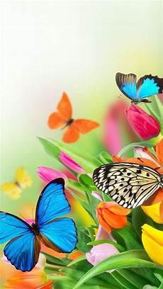 iphone lock screen butterfly wallpaper wallpaper butterfly iphone 2019 3d iphone wallpaper