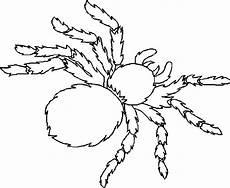 Malvorlagen Spinnen Spinnen
