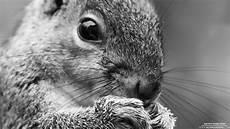 squirrel 7 19 2013 wallpaper kicking designs