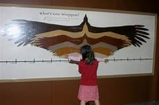 Bird Wingspan Chart How Wide Is Your Wingspan At The Science Museum The