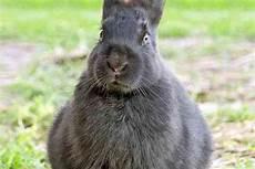 costruire gabbia conigli come costruire una gabbia per conigli donnad