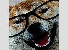 SMART SHIBA INU DOG T SHIRT DESIGN   Fancy T shirts