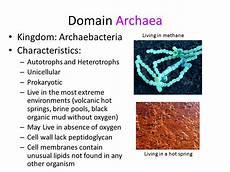 Archaea Examples Unit 8 Domains And Kingdoms Mr Pereira S Bio Blog