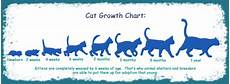 Baby Kitten Age Chart I Recently Just Found A Baby Kitten Please Help Yahoo