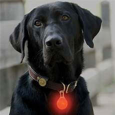 Dog Led Light Pet Safety Lights Led Collar Light Orvis Uk