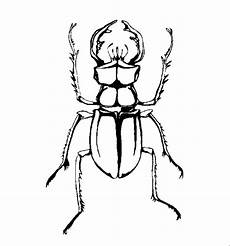 Malvorlagen Insekten Insekten 00255 Gratis Malvorlage In Insekten Tiere Ausmalen