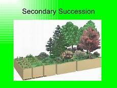 Secondary Succession Population Ecology Succession