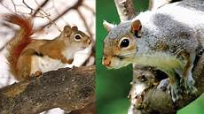 Where Do Squirrels Live Learn About Squirrels Mass Gov