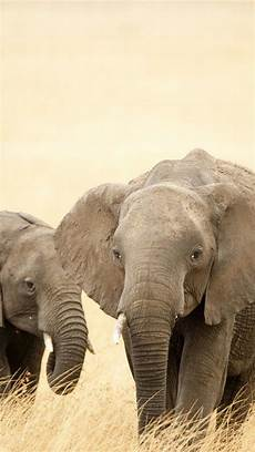 iphone x wallpaper elephant elephant iphone wallpaper 74 images