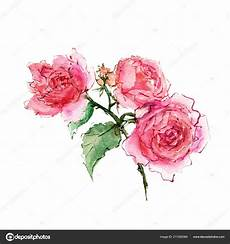 roses watercolor pink roses drawing flowers decoration