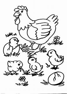 animali da cortile da colorare disegni animali da colorare gallina gallo pulcino disegno