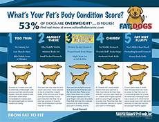 Ideal Weight For Dogs Weight Chart A Dog S New Year S Resolution Lose 5 Pounds Dogshome